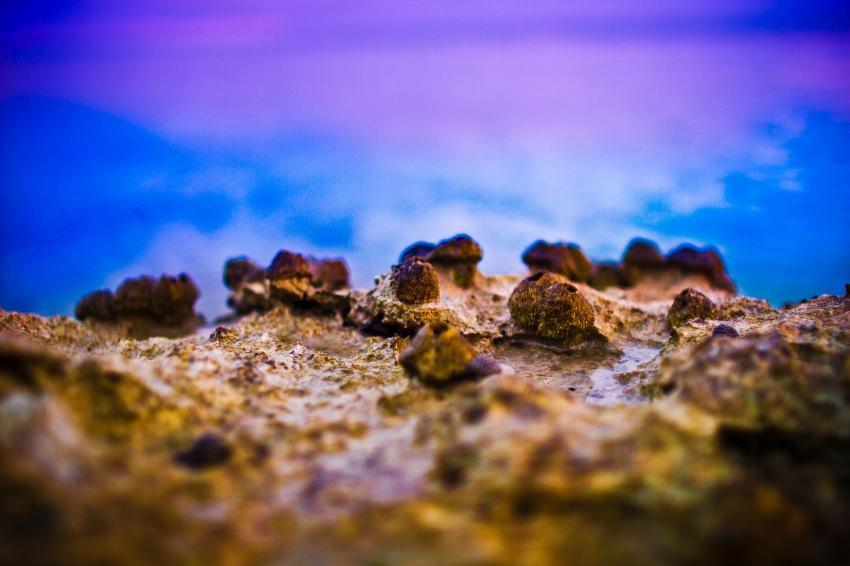 coral.bahams